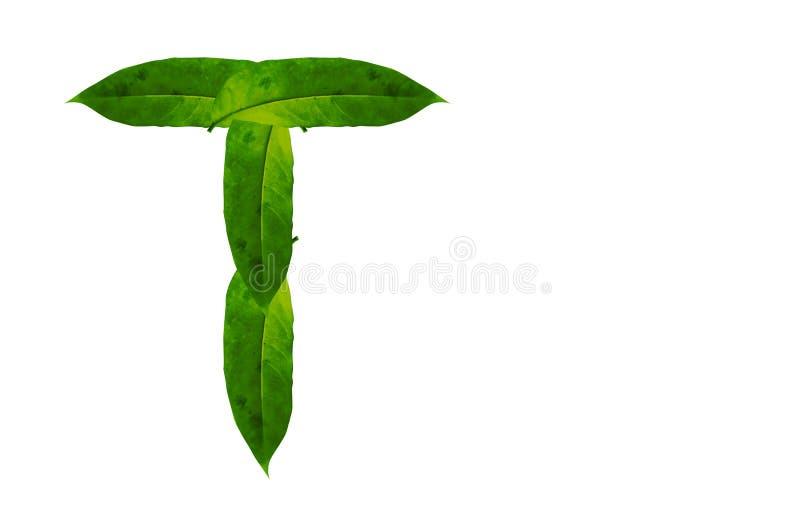 De groene Achtergrondafbeelding van de bladbrief T Natuurlijk Bosbladalfabet vector illustratie
