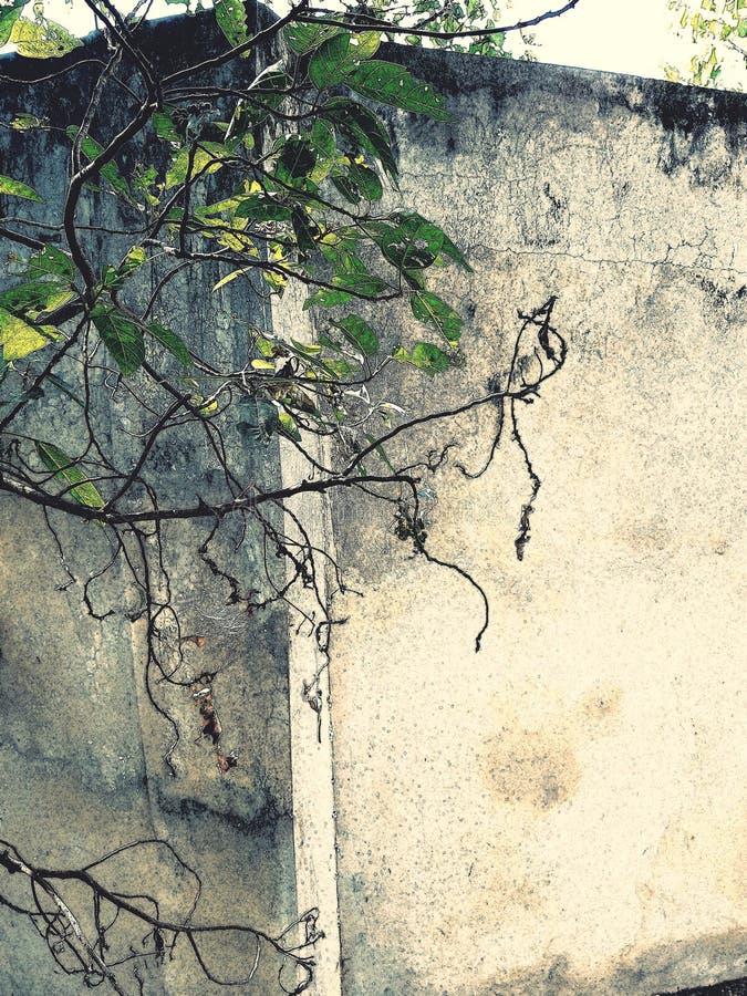 De groene bakstenen muur van boombladeren n royalty-vrije stock foto