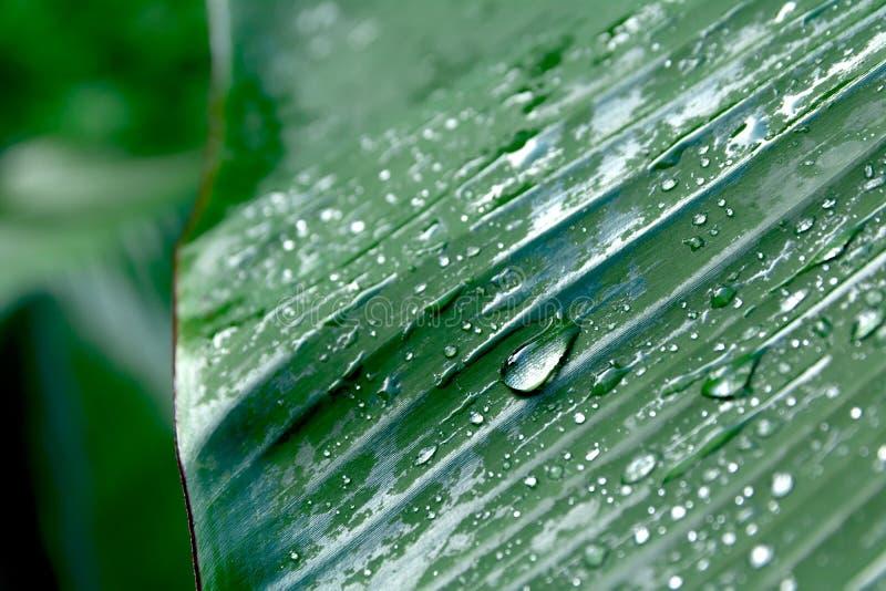 De groene blad macro, groene verse installaties sluiten omhoog voor achtergrond royalty-vrije stock foto's