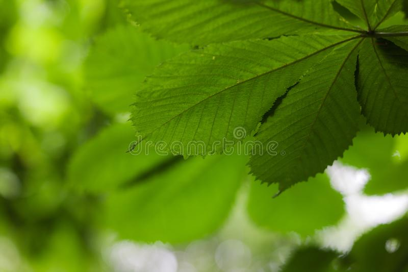 De groene bladeren sluiten omhoog stock afbeeldingen