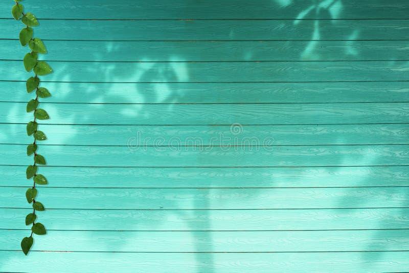 de groene bladeren van Coatbuttons-aardgrens en de boom van de schaduwinstallatie op aqua kleuren hout royalty-vrije stock afbeeldingen
