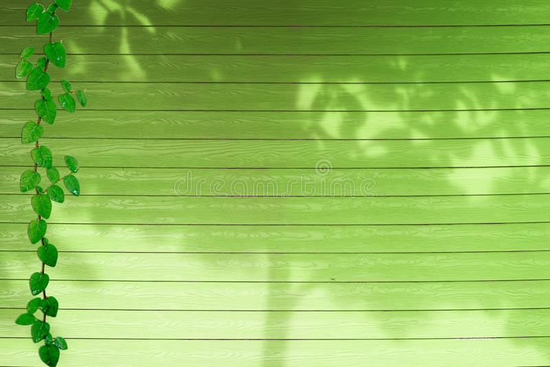 de groene bladeren van Coatbuttons-aardgrens en schaduw planten boom op groen hout stock foto