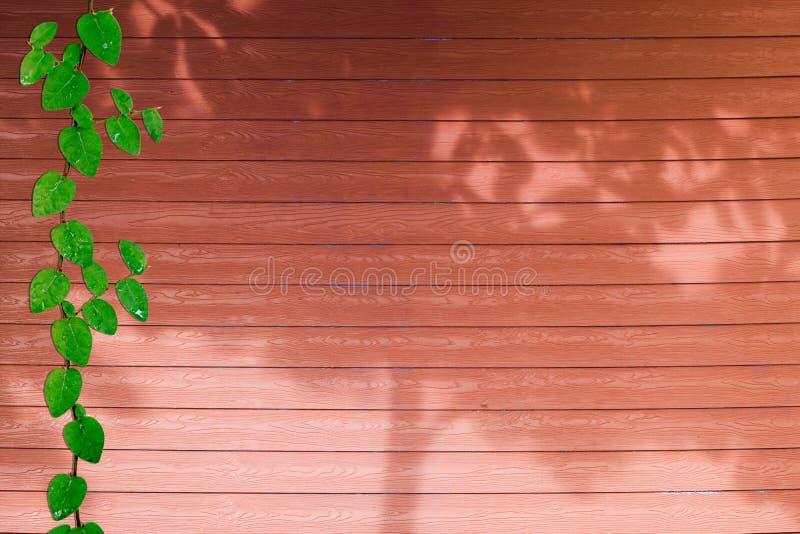 de groene bladeren van Coatbuttons-aardgrens en schaduw planten boom op rood hout stock foto's
