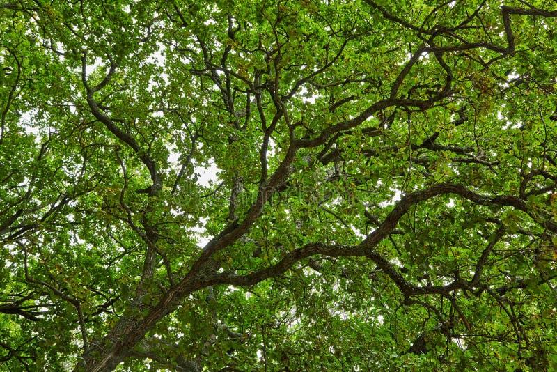 Download De Groene Bladeren Van De Lente Stock Foto - Afbeelding bestaande uit mooi, openlucht: 107703842