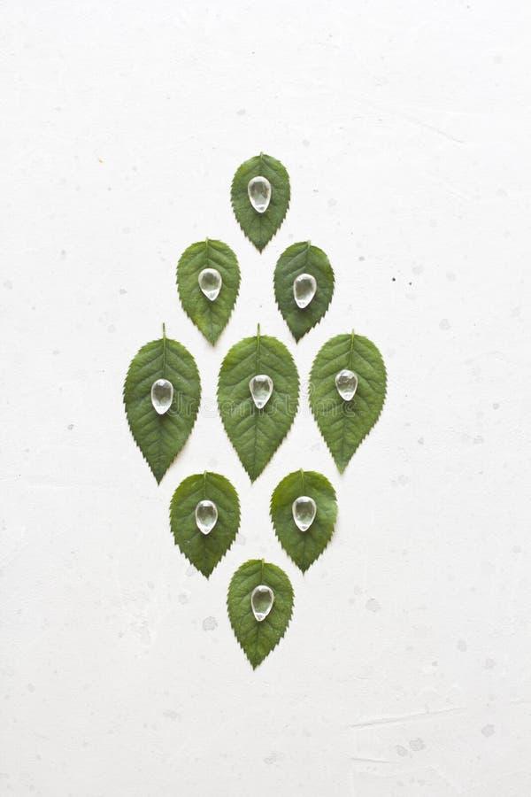 De groene bladeren van namen toe Het kristal van de natuursteenrots Ongebruikelijk, onwerkelijk, surrealisme, aard, ecologie royalty-vrije stock afbeeldingen