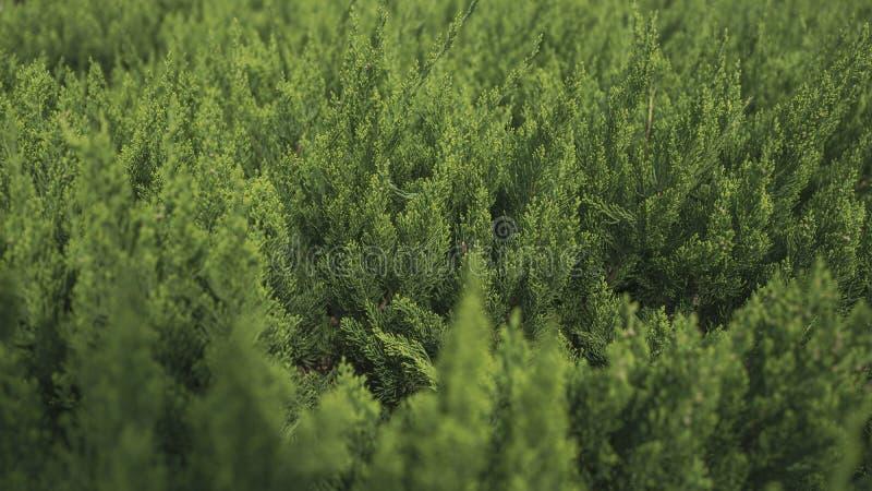 De groene bladeren, vertroebelende achtergrond stock foto