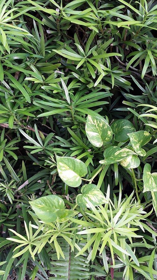 De groene bladeren vormen een achtergrond met smalle bladeren en philodendron het toevoegen van ingewikkeldheid royalty-vrije stock foto's