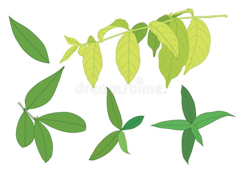 De groene bladeren zijn een boeket Verse illustratie stock illustratie
