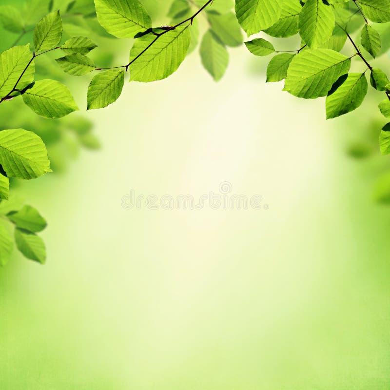 De groene bladerenlente en de zomerachtergrond royalty-vrije stock foto