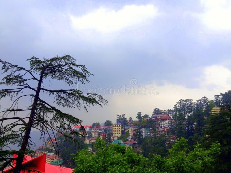 De groene bomen van Shimlahimachal Pradesh op regenachtige dag stock foto's