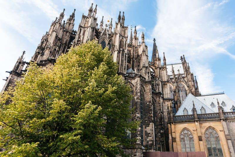 De groene boom en Kathedraal van Keulen in september stock afbeeldingen
