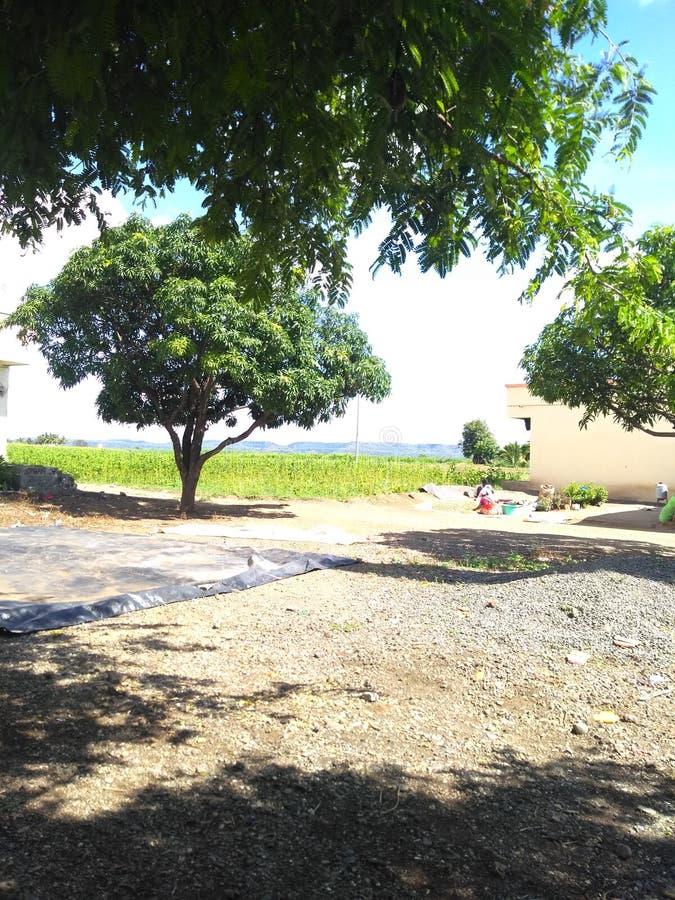 De groene boom op gebied kijkt mooi stock foto