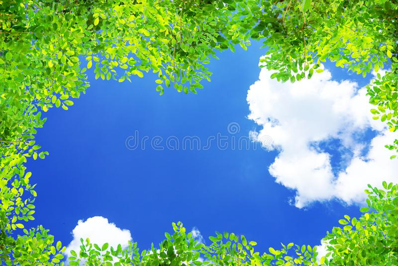 De groene boom vertakt zich bladerenkader op blauwe hemel en betrekt aardachtergrond stock afbeeldingen