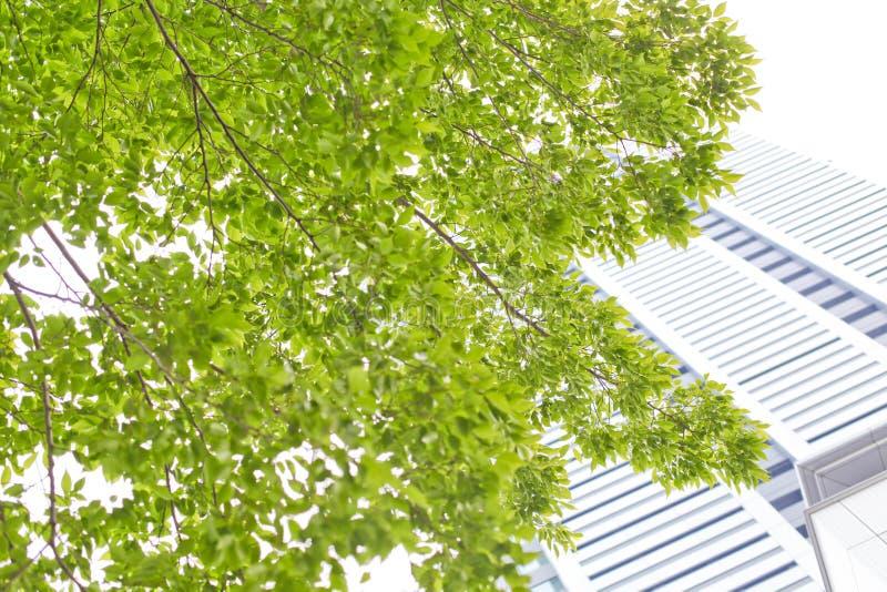 De groene bouw, royalty-vrije stock afbeeldingen