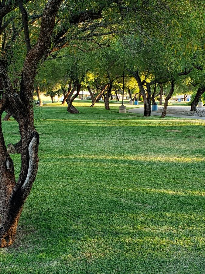 De groene cursus van het de merengolf van het riemgras Phoenix scottsdale stock foto