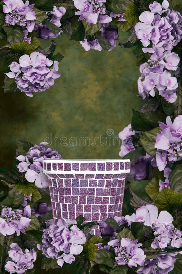 De groene en Purpere Achtergrond Bloemen van de Achtergrond van de Hydrangea hortensia stock foto's