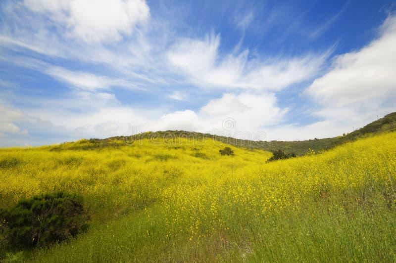 De groene gebieden van de lente en wilde bloem royalty-vrije stock afbeelding
