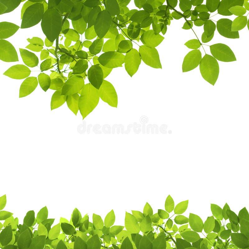 De groene Grens van Bladeren op wit royalty-vrije stock fotografie