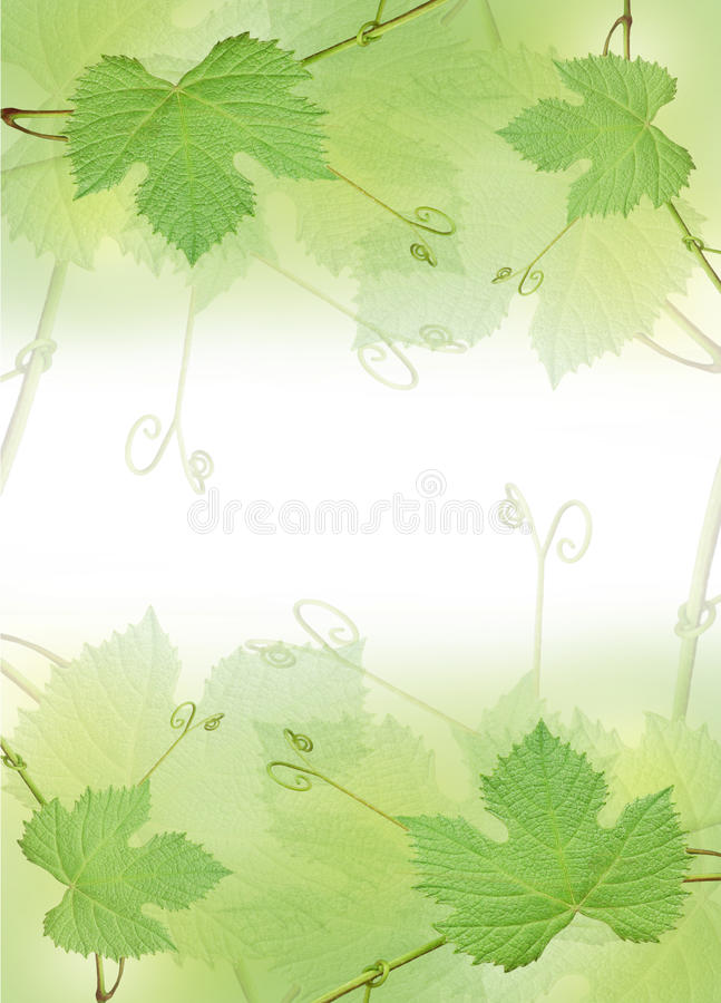 De groene grens van het druivenblad stock afbeeldingen