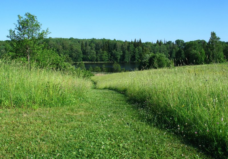 De groene groene zomer royalty-vrije stock afbeeldingen