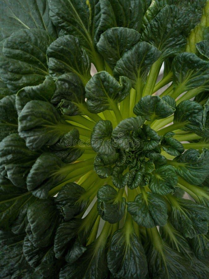 De groene groente royalty-vrije stock afbeeldingen