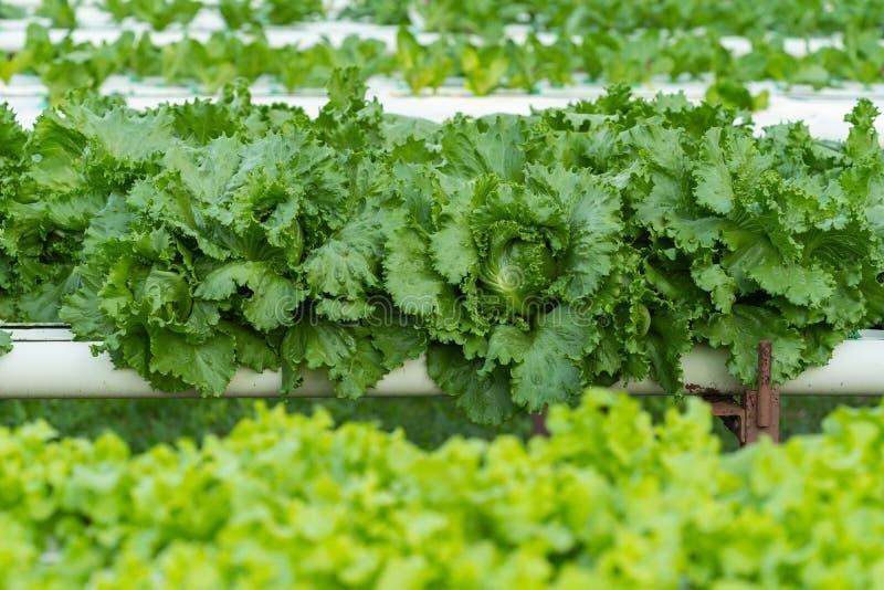 De groene groente van de slahydrocultuur royalty-vrije stock foto's