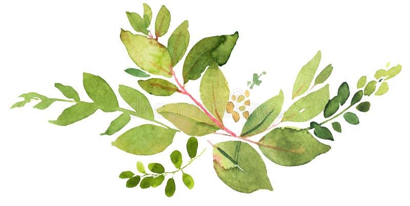 De groene illustratie van de takjewaterverf royalty-vrije illustratie