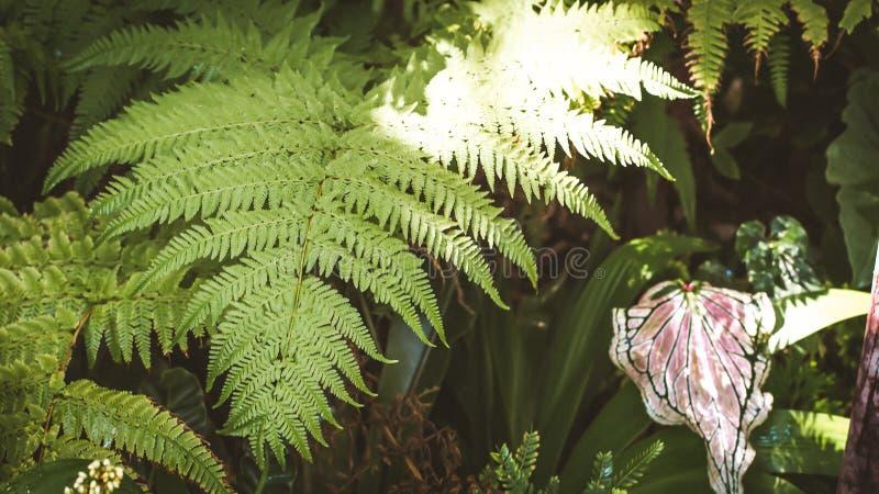 De groene installatie van het het regenwoudgebladerte van de bladerenvaren tropische stock afbeelding
