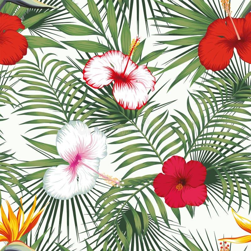 De groene installaties naadloos wit van de paradijsvogel veelkleurig hibiscus royalty-vrije illustratie