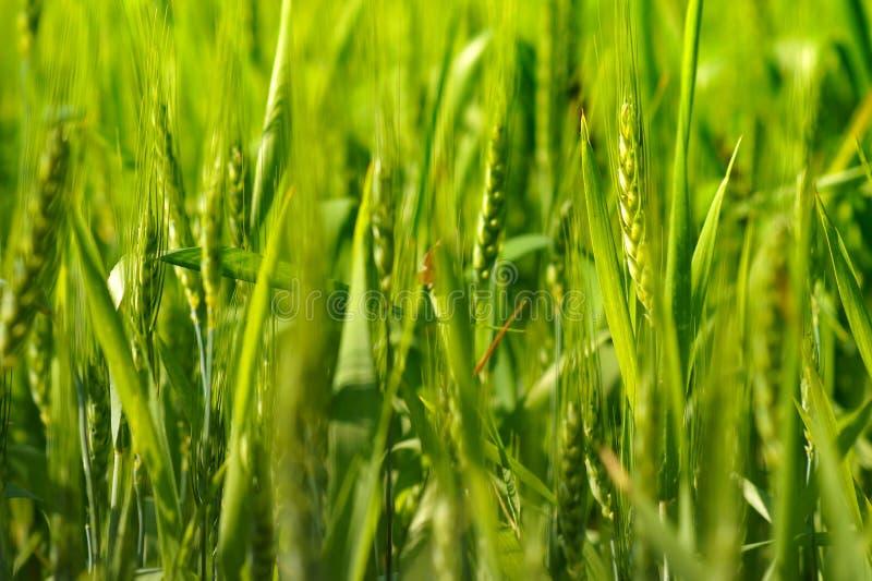 De groene Landbouw royalty-vrije stock fotografie