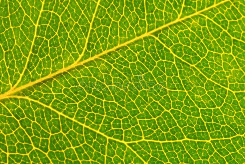De groene macro van het blad royalty-vrije stock afbeeldingen