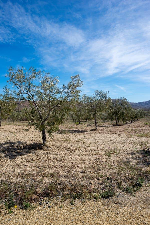 Download De Groene Manier Van Lucainena Onder De Blauwe Hemel In Almeria Stock Foto - Afbeelding bestaande uit naughty, woestijn: 114227744