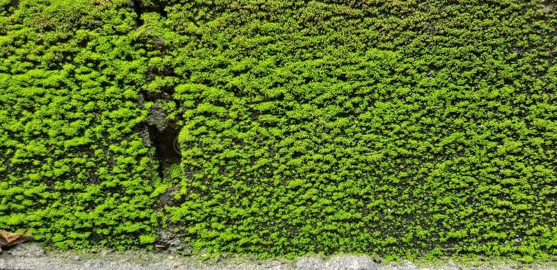 De groene Muur royalty-vrije stock afbeeldingen