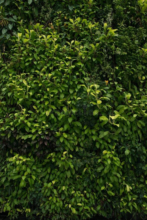 De groene muur, eco vriendschappelijke verticale tuin gaat backgound weg royalty-vrije stock fotografie