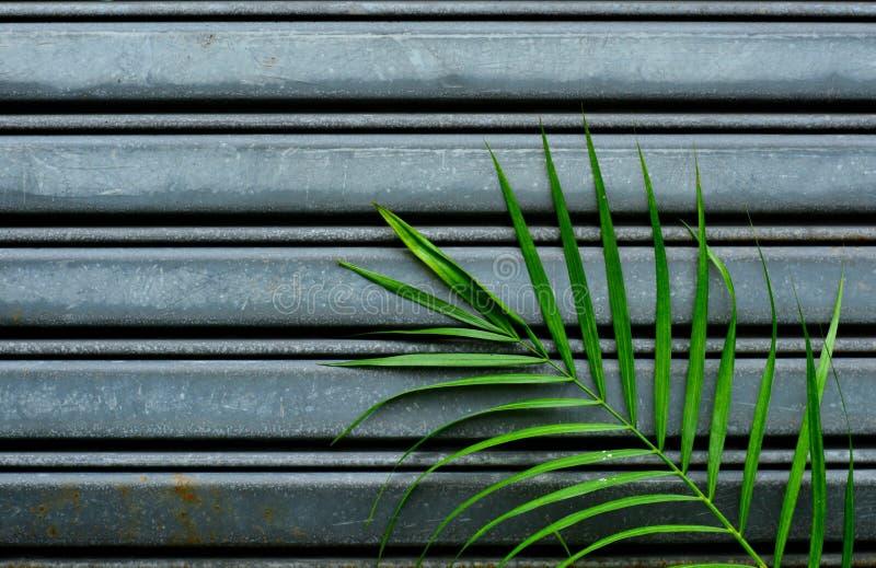 De groene palmbladenpatronen zien uit op de metaaldeur voor achtergrond stock afbeeldingen