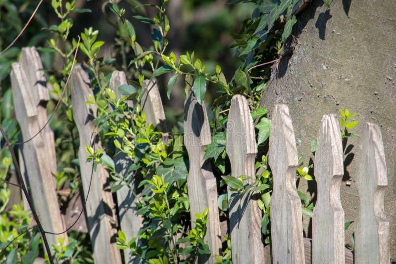 De groene struiken groeien door houten omheining stock fotografie