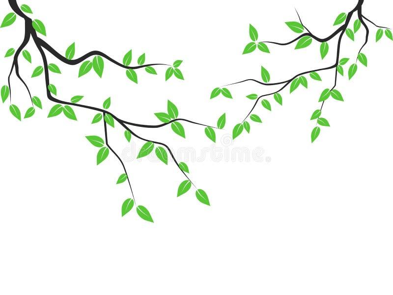 De groene Tak van de Bladerenboom royalty-vrije illustratie