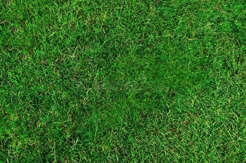 De groene Textuur van het Gras stock afbeelding