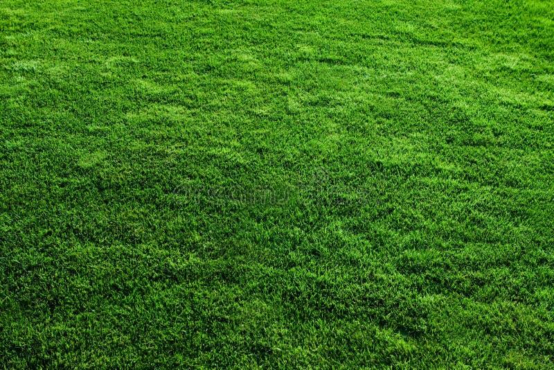 De groene Textuur van het Gras stock afbeeldingen