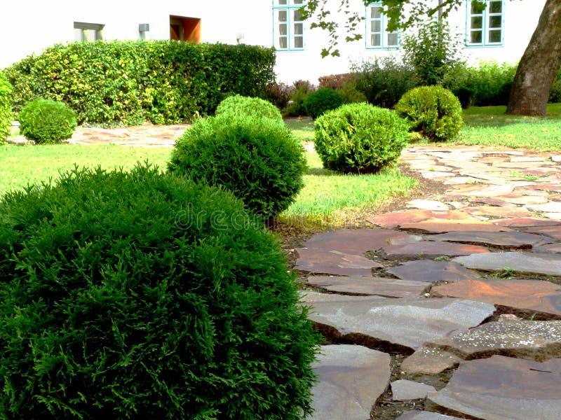 de groene tuinweg met kleine bal gaf altijdgroene struiken en rode kleuren het rustieke steen bedekken gestalte stock fotografie