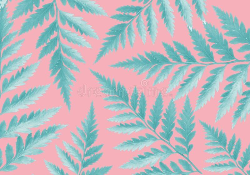 De groene varen verlaat roze achtergrondconceptenillustratie stock illustratie