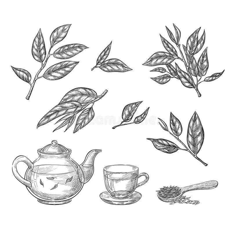 De groene vectorillustratie van de theeschets Bladeren, theepot en kophand getrokken geïsoleerde ontwerpelementen vector illustratie
