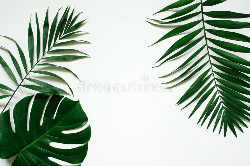 De groene vlakte legt tropische palmbladtakken op wit stock fotografie