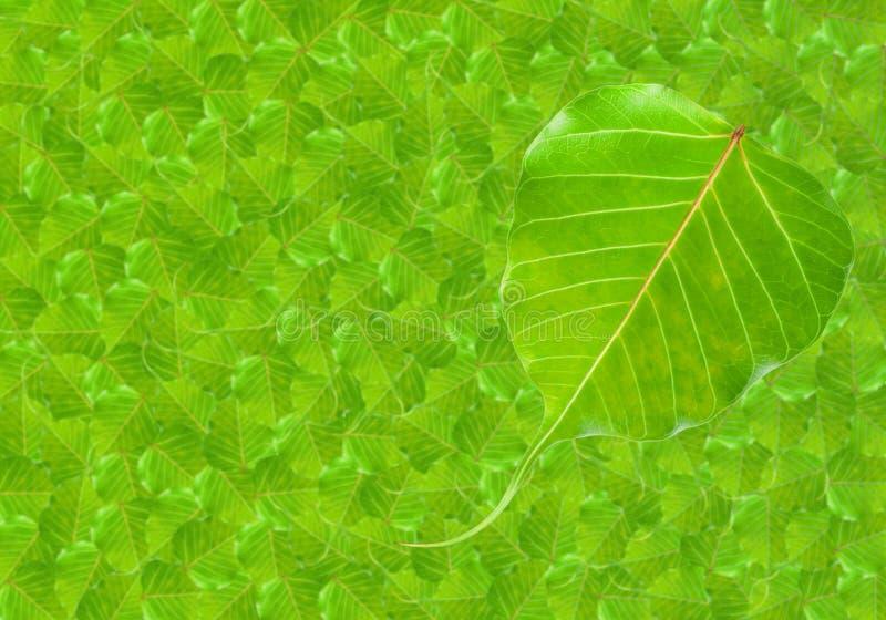 De groene vorm van het bladhart royalty-vrije stock foto