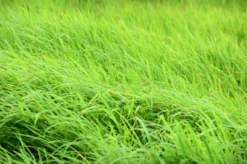 De groene weide met wind blaast prachtig stock foto's