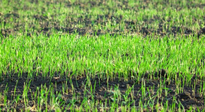 De groene weide van het gras royalty-vrije stock afbeelding