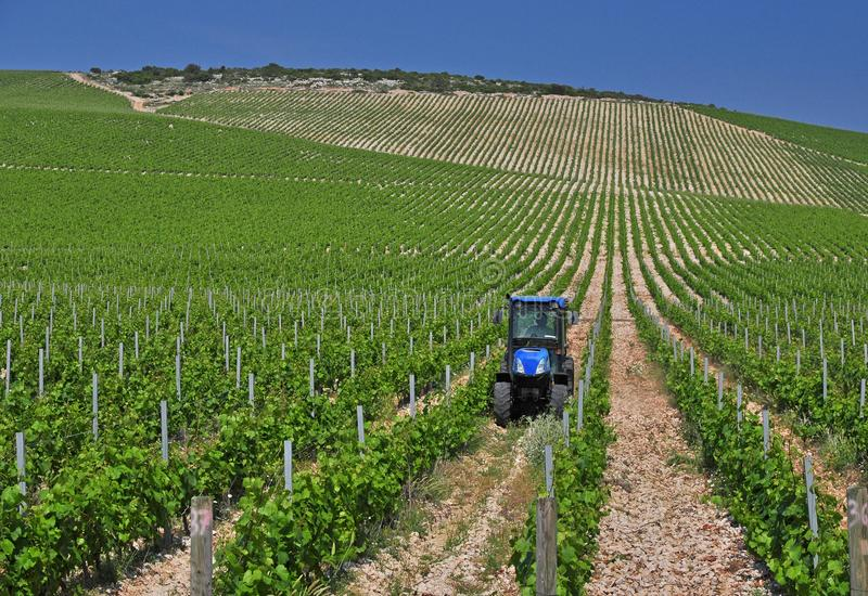 De groene wijngaard landbouw stock afbeelding