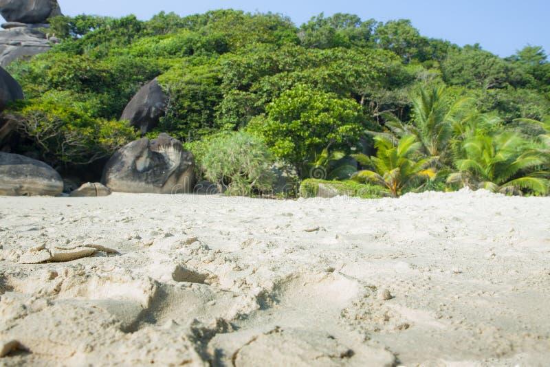 De groene wildernis van Paradise en grote stenen keerkringen Zandkust, rotsen en vele installaties royalty-vrije stock foto's
