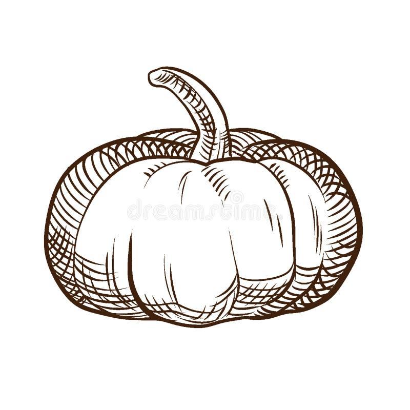 De groente van de de herfstoogst Smakelijke, rijpe, verse pompoen van de tuin stock illustratie
