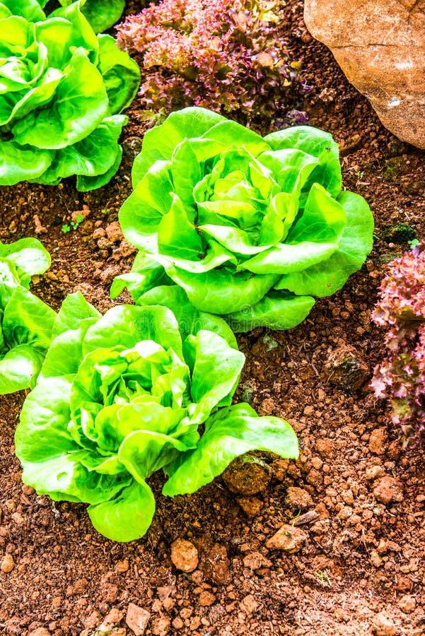 De groenten in percelen stock foto's